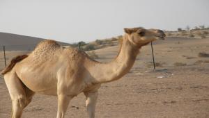 Dove si trova Abu Dhabi?