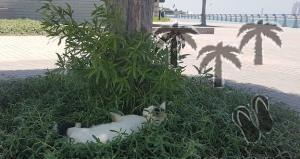 Caldo ad Abu Dhabi: piccole strategie di difesa