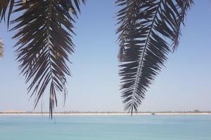 Riaperture ad Abu Dhabi